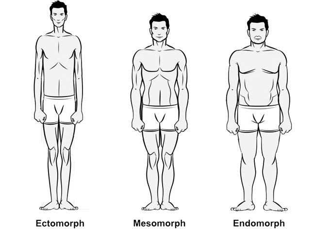 Your Body Type - Ectomorph, Mesomorph or Endomorph?
