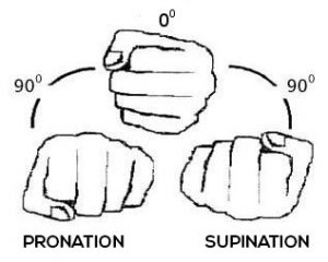 Pronation and Supination when training triceps.