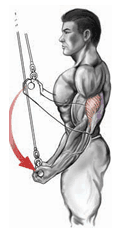 Triceps pushdown with a straight bar and an underhand grip