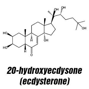 20-HYDROXYECDYSTERONE