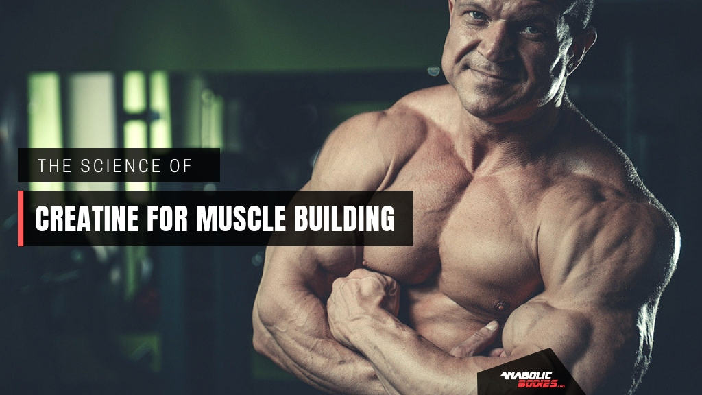 Creatine For Muscle Building - The Scientific Review by Anabolic Bodies